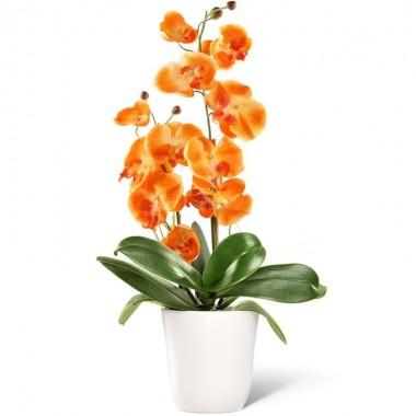 Pianta Orchidea Arancione